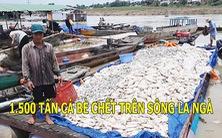 Góc nhìn trưa nay 23-5-2018: Cá chết trắng bè trên sông La Ngà do ô nhiễm nguồn nước sau mưa
