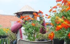 Làng hoa lớn nhất miền Tây chính thức thu phí tham quan 20.000 đồng