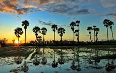 Bình dị mà rạng rỡ trên cánh đồng lúa Tà Pạ ở Tri Tôn