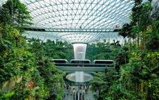Lạc vào 'khu rừng' bên trong sân bay Changi Singapore