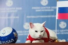 Mèo Achilles được chọn làm 'nhà tiên tri' cho Euro 2020