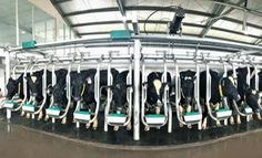 Vinamilk sản xuất sữa A2 lần đầu tiên tại Việt Nam