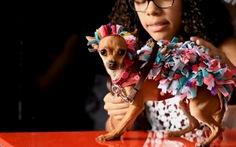 Đến El Salvador xem cún cưng diễn thời trang