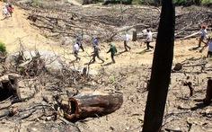 Bắt chủ công ty nghi chủ mưu vụ phá rừng ở Bình Định