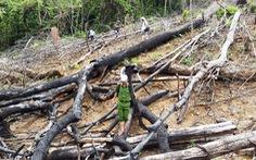 Đình chỉ khởi tố nhiều vụ phá rừng do không xác định bị can