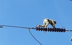 """""""Lính"""" bảo vệ…đường dây điện"""