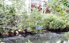 Nhuộm vải làm ô nhiễm môi trường, xã giao cho dân cùng... giám sát!