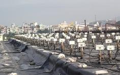 Nghị sỹ Mỹ tham quan việc xử lý dioxin sân bay Đà Nẵng