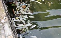 Xem bao cao su ở Hồ Tây như một loại rác, được không?