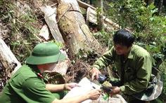 Nghệ An kiểm tra vụ phá rừng trong Vườn quốc gia Pù Mát