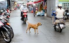 Không đeo rọ mõm cho chó bị phạt đến 800 ngàn đồng