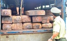 Bắt xe tải ngụy trang phân gà để giấu gỗ quý