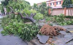 Hơn 300 cây xanh ở TP.HCM bị đổ, gãy do  bão số 14