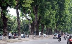 Chặt hạ, di chuyển 130 cây xanh trên đường Kim Mã