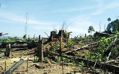 Kiểm tra rừng phòng hộ sau yêu cầu của Thủ tướng