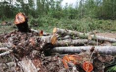 Nếu trồng rau không được thì trồng lại rừng kinh tế