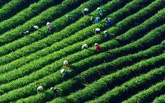 Khởi nghiệp nông nghiệp: giấc mơ lớn dần