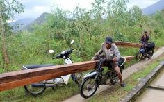 Ngang nhiên phá rừng phòng hộ bán gỗ làm bè nuôi tôm