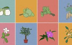10 cây giải độc tuyệt vời