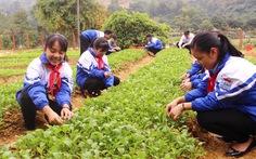 Vườn rau của học trò: áp dụng từ môn công nghệ