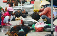 100% mẫu thịt heo, gà, vịt nhiễm vi khuẩn E.coli