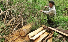 Sẽ kỷ luật cán bộ để 'tan nát rừng đầu nguồn' Lào Cai, Yên Bái
