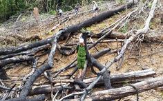 Cách chức chủ tịch xã trong vụ phá rừng phòng hộ Tiên Lãnh