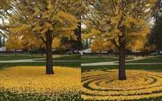 Những tác phẩm nghệ thuật từ lá cây rụng