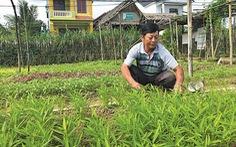 Bước ra thế giới nhờ... trồng rau sạch