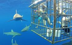 Đi Australia ngủ cùng động vật, bơi cùng cá mập