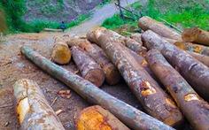 Tan nát rừng đầu nguồn: Cận cảnh rừng phòng hộ bị phá