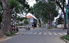 Vũng Tàu mở rộng đường, vẫn giữ lại hàng chục cây xà cừ 100 tuổi