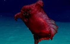 Video 'quái vật gà không đầu' dưới đại dương