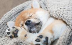 Liệu cún cưng của bạn có thật sự yêu quý bạn?