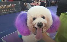 Đặc sắc lễ hội cún cưng Sài Gòn
