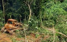 Rừng Khe Cau bị ủi, công an và kiểm lâm chỉ qua chỉ lại