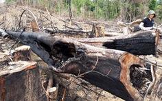 Bộ Nông nghiệp phản đối 3 dự án 'phá' rừng tự nhiên