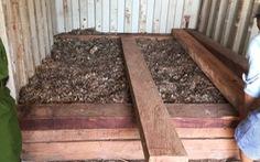 Phát hiện vảy tê tê ngụy trang trong gỗ nhập khẩu tại cảng Hải Phòng