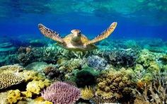 Phú Quốc khởi tố 2 vụ nuôi nhốt rùa biển