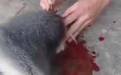 Làm rõ 5 người liên quan vụ giết khỉ, ăn óc khoe lên mạng