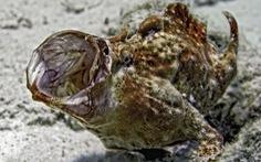 Loài cá nhanh như tia chớp khiến giới khoa học choáng váng
