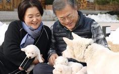 """'Món quà hòa bình"""" của lãnh đạo Triều Tiên sinh sôi trên đất Hàn"""