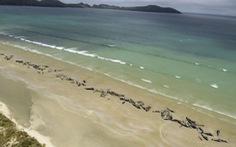 Bất thường 145 con cá voi lao lên bờ nằm chết