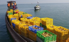 Bắt thuyền chở 50.000 gà giống từ Trung Quốc về Việt Nam