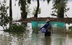 Những mùa cá đồng miền lũ - kỳ 3: Khi nguồn cá đồng cạn kiệt