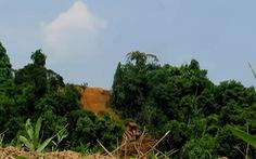 Yêu cầu xác minh vụ ủi rừng Khe Cau, đủ chứng cứ sẽ khởi tố hình sự