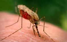 Nghiên cứu phương thức mới tiêu diệt mầm bệnh sốt rét trong gan