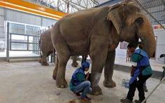 Ấn Độ mở bệnh viện đầu tiên dành cho voi