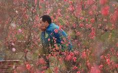 Phút chùng lòng cuối năm, rưng rưng nhớ những mùa hoa Hà Nội