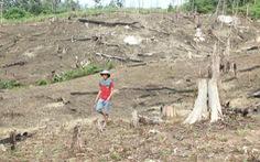 Cách chức phó chủ tịch huyện hợp thức hóa đất rừng cho vợ